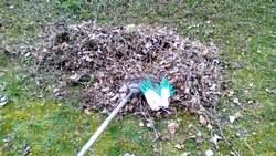 ratissage des feuilles